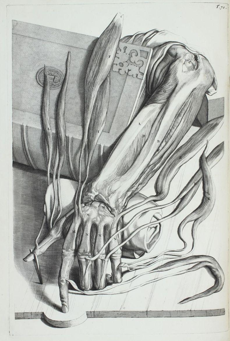 Уроки анатомии от аллы 1 фотография
